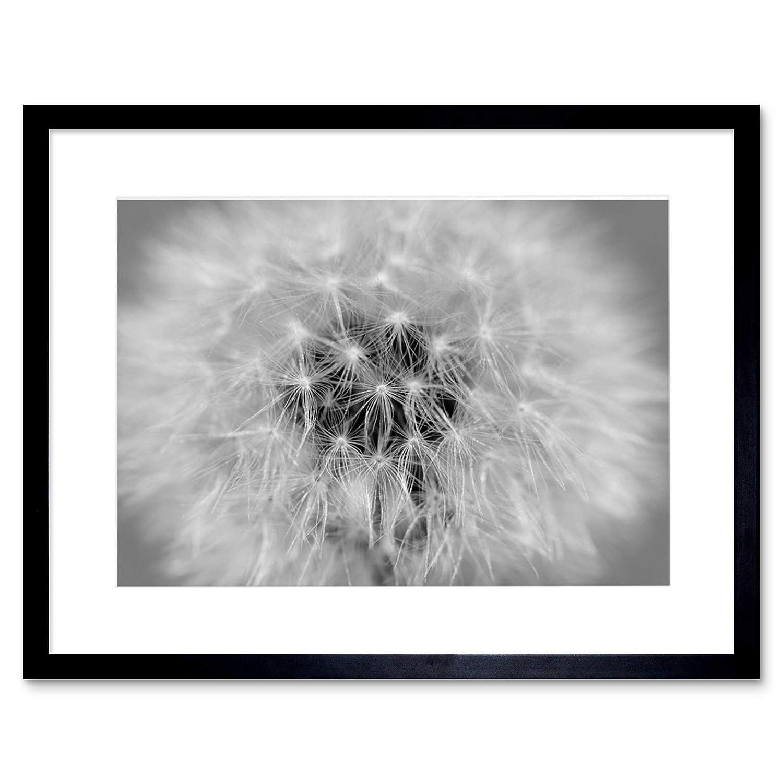 Amazon com the art stop photo black white dandelion seeds framed print f12x2822 posters prints