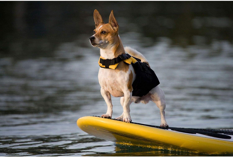 chien sur padlle avec gilet de sauvetage jaune