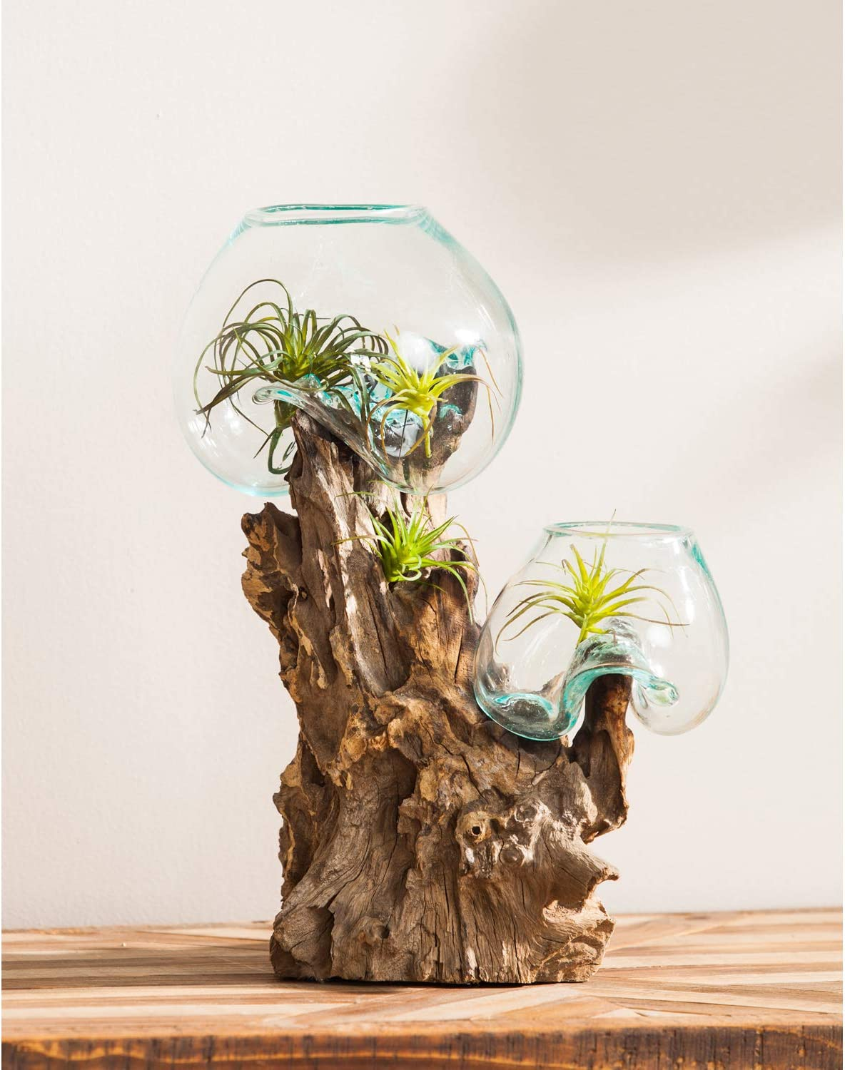 Cape Craftsmen Large Hand-Blown Blue Tinted Bubble Glass On Driftwood Terrarium