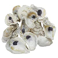 The Shell Connection | Oyster Shells 3