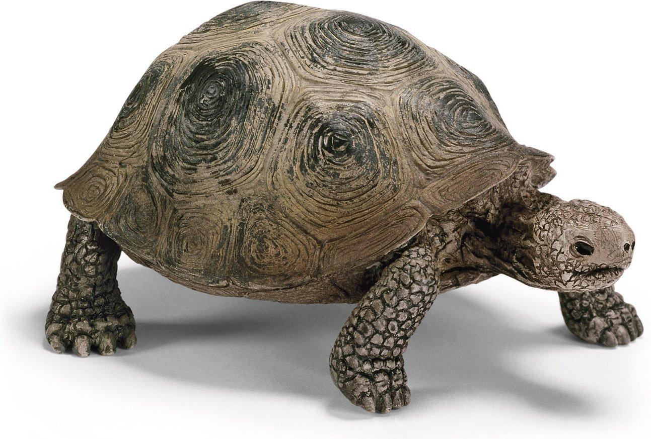 Warning turtles amp tortoises inc - Warning Turtles Amp Tortoises Inc 2