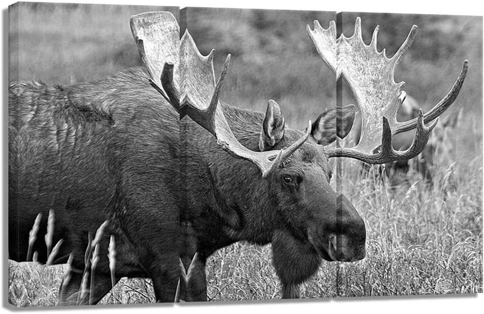 Welmeco 3 Pieces Animals Picture Wall Decor Black and White Moose Canvas Prints Wildlife Artwork Framed and Stretched Gallery Wrapped for Modern Home Living Room Bedroom Decoration