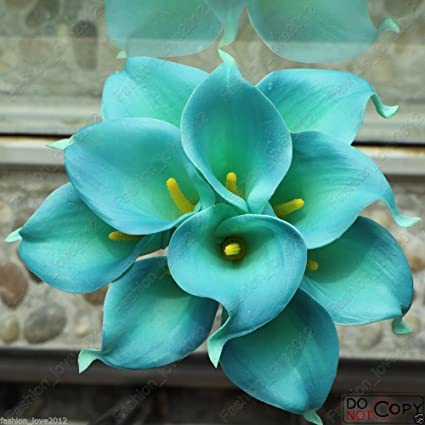 Image result for teal flowers