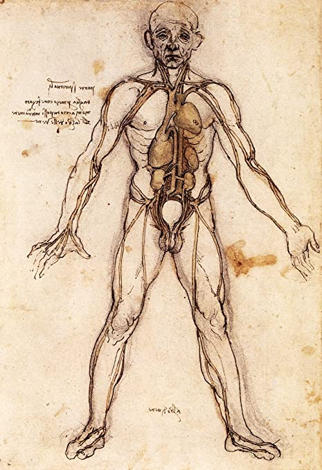 Tree Of Vessels Poster By Leonardo Da Vinci Veins Blood