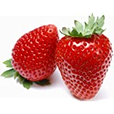E Plant Strawberry Seeds- 50 Nos