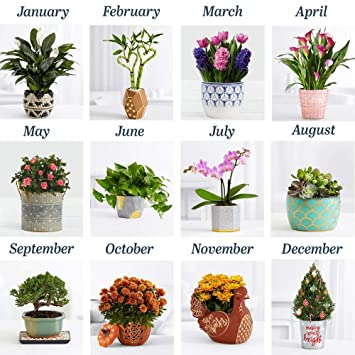 Houseplants Red Colored on orchids red, mums red, cactus red, peppers red, design red, animals red, ornamental grasses red, pots red, berries red, nature red, flowers red,