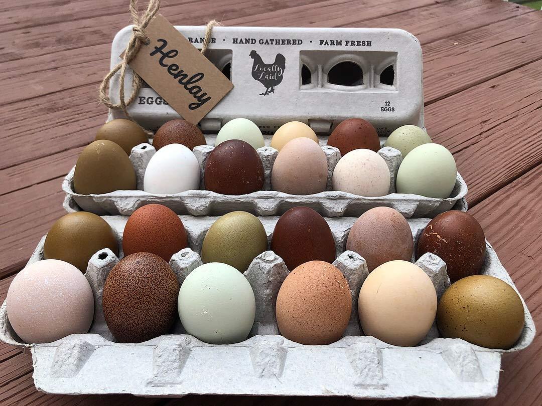 Amazoncom Vintage Printed Egg Cartons One Dozen