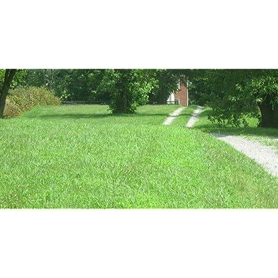 5 Lbs. Kentucky 31 Tall Fescue Grass Seed, Lawn & Garden Seed : Garden & Outdoor