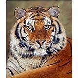 UEB Tiger 5D Diamond DIY Painting Kit Home Decor Craft(30 X 40cm)