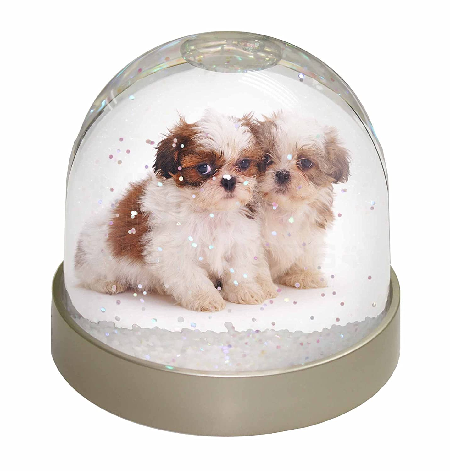 Advanta Shih-Tzu Dog Photo Snow Globe Stocking Filler Gift, Multi-Colour, 9.2 x 9.2 x 8 cm Advanta Products AD-SZ2GL