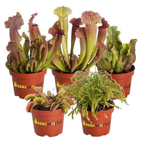 BOTANICLY | Planta de lodo - Swampworld mezcla planta ...