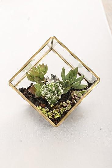 Mini Gewachshaus Glas Eimer Deko Aus Glas Transparent Mit Rahmen Von