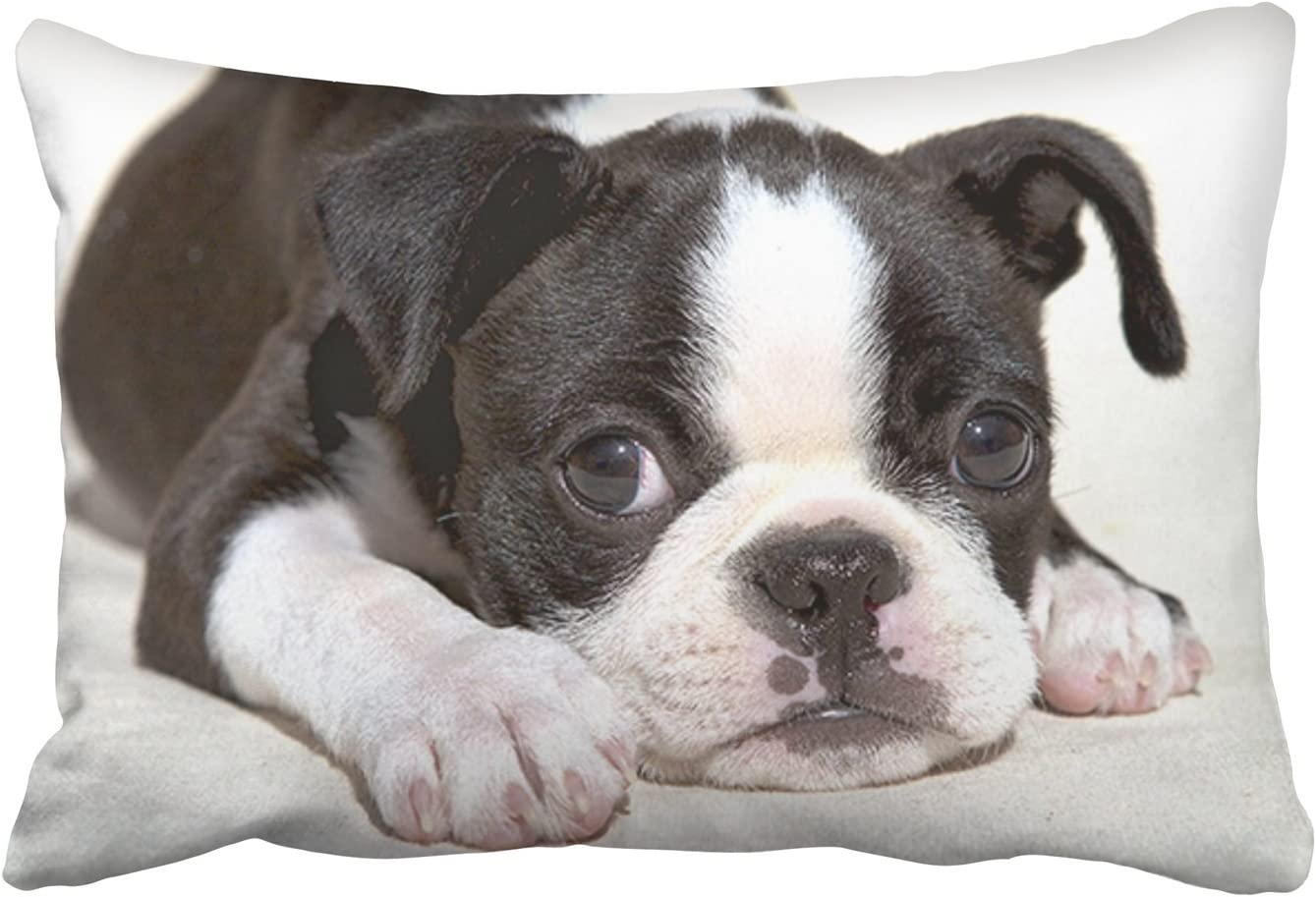 Amazon Com Jbralid Cute Tummy Boston Terrier Puppy Black And White Pillow Cover Cotton Linen Indoor Decor Throw Pillow Case 16x24 In Home Kitchen