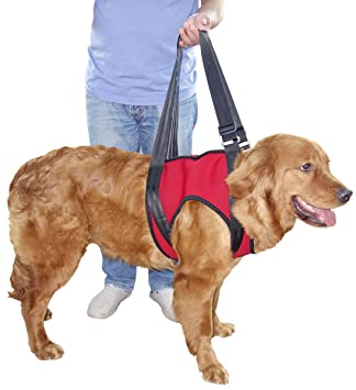 Amazon.com : Vivaglory Dog Lift Harness, ist Lifting Harness ...