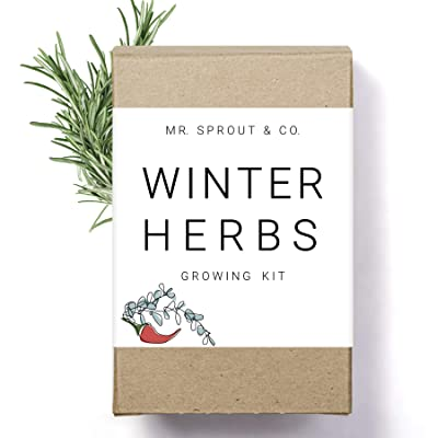 Winter Indoor Garden Kit - Herb Garden Seed Starter Kit for Gardening Indoors | Plant Grow Kit with Sage Rosemary Seeds and Hot Pepper Seeds for Planting | Growing Fresh Kitchen Herbs - By Mr Sprout : Garden & Outdoor