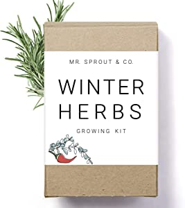Winter Indoor Garden Kit - Herb Garden Seed Starter Kit for Gardening Indoors | Plant Grow Kit with Sage Rosemary Seeds and Hot Pepper Seeds for Planting | Growing Fresh Kitchen Herbs - By Mr Sprout