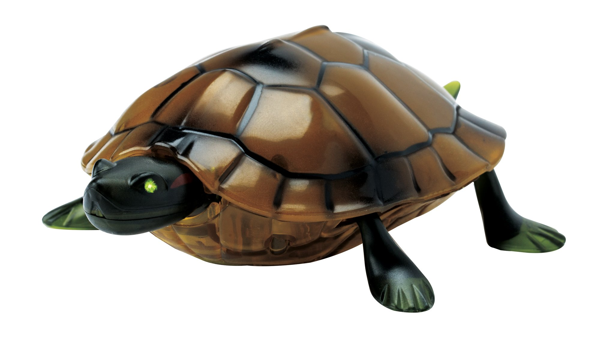 The Paragon Remote Control Turtle - RC Animal Toy, Turtle Toy for Kids and Adults by The Paragon (Image #9)