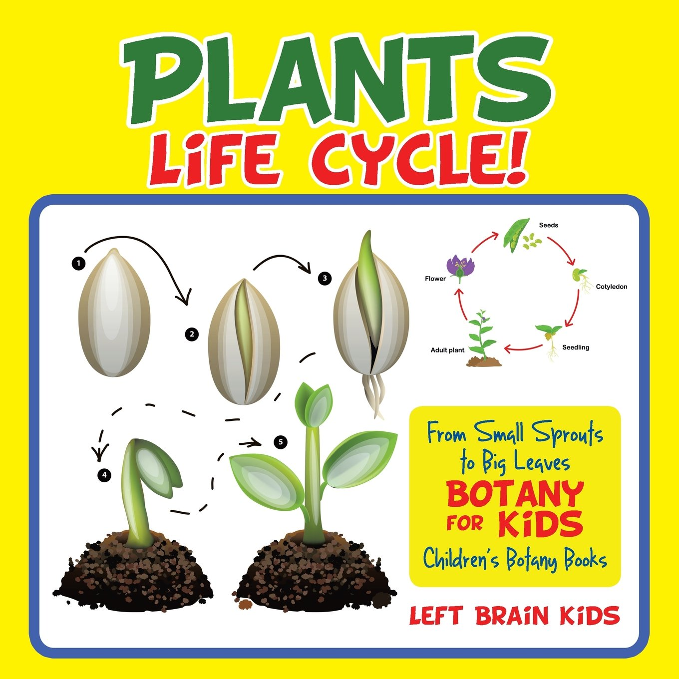 A Plant's Life Cycle! From Small Sprouts to Big Leaves