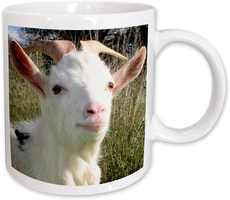 11-Ounce 3dRose mug/_9935/_1 Donkey in a Farm 2 Ceramic Mug