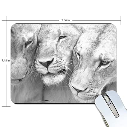 5a8252f956802 Amazon.com : Threesome Lioness Animals Mouse pad Mouse pad mice pad ...