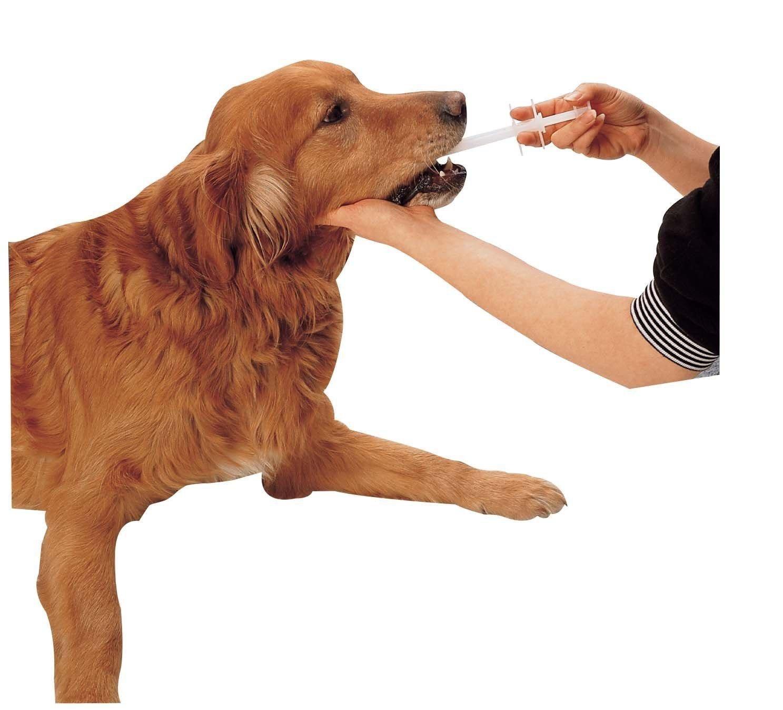 Amazon.com: Pet Pill Gun Handy Piller Tablets Dispenser Pet Feeding for Dogs,  Cats, Animals: Pet Supplies