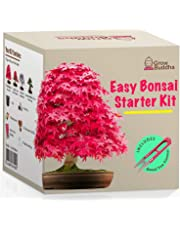 Coltivare il proprio kit bonsai - Facilmente crescere 4 tipi di alberi bonsai con il nostro completo principiante amichevole Bonsai semi Kit di avviamento - Idea regalo kit di semi unico