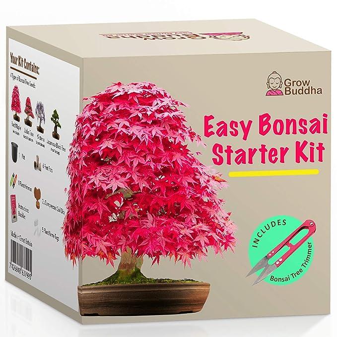 38 opinioni per Coltivare il proprio kit bonsai- Facilmente crescere 4 tipi di alberi bonsai con