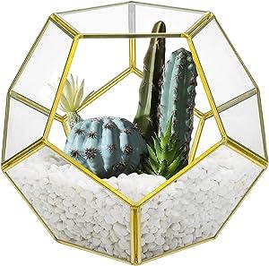 Suwimut Glass Geometric Terrarium, 7.5 x 7.5 x 6.3 Inches Pentagon Regular Planter Container for Succulent, Fern, Moss, Air Plants, Miniature Fairy Garden, Home Shelf Decor (No Plants Included)