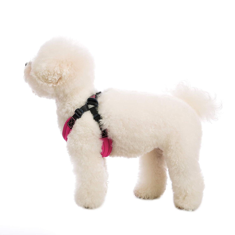 Gooby Deporte Perro arnés: Amazon.es: Productos para mascotas