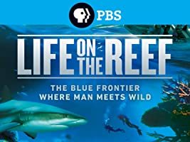 Life on the Reef Season 1