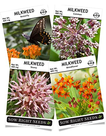 sow right seeds - milkweed seed collection