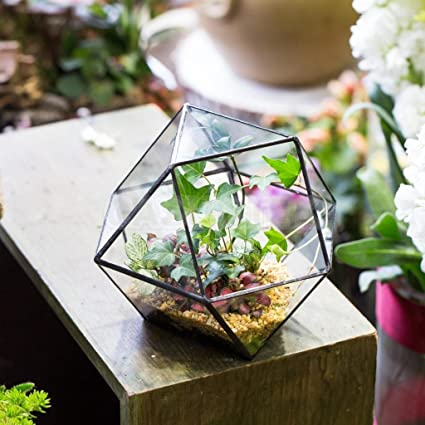 Buy Electroprime 2pcs Glass Succulent Terrarium Box Air Plant Fern