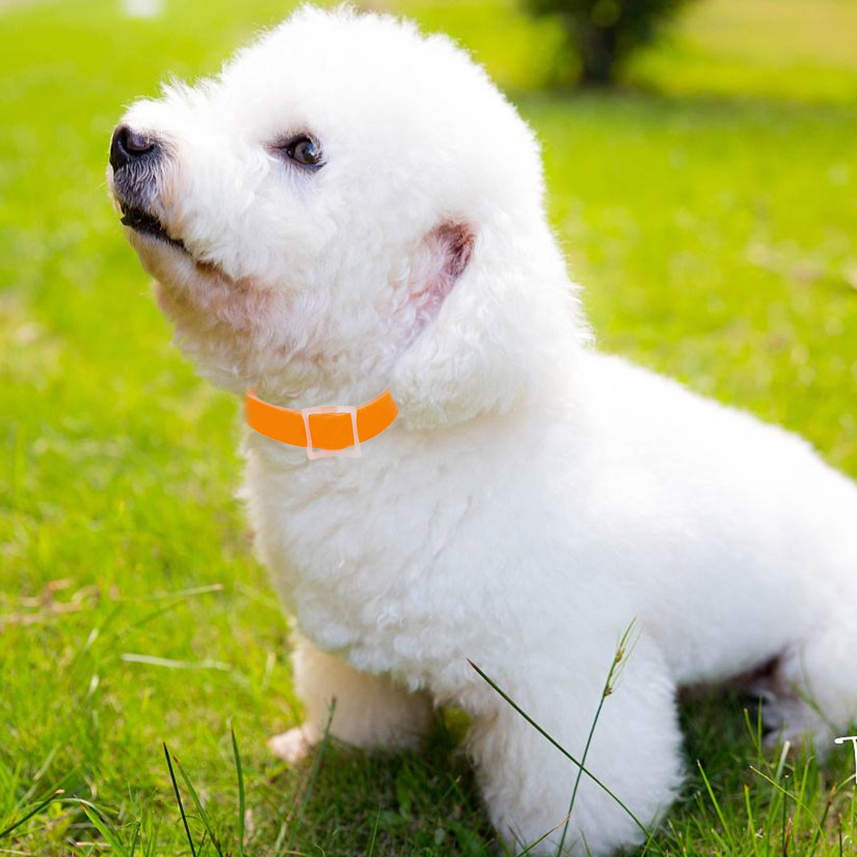 40cm gato mascota mini perro salud anti piojos cuello anti pulgas garrapatas mosquitos repelente collar parásitos desparasitación naranja: Amazon.es: ...