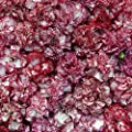Raspberry Ripple Carnation Seeds 300 Seeds Upc 646263361702 + 2 Free Plant Markers