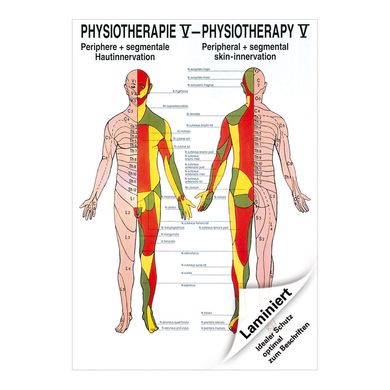 Hautinnervation Mini-Poster Anatomie 34x24 cm medizinische ...
