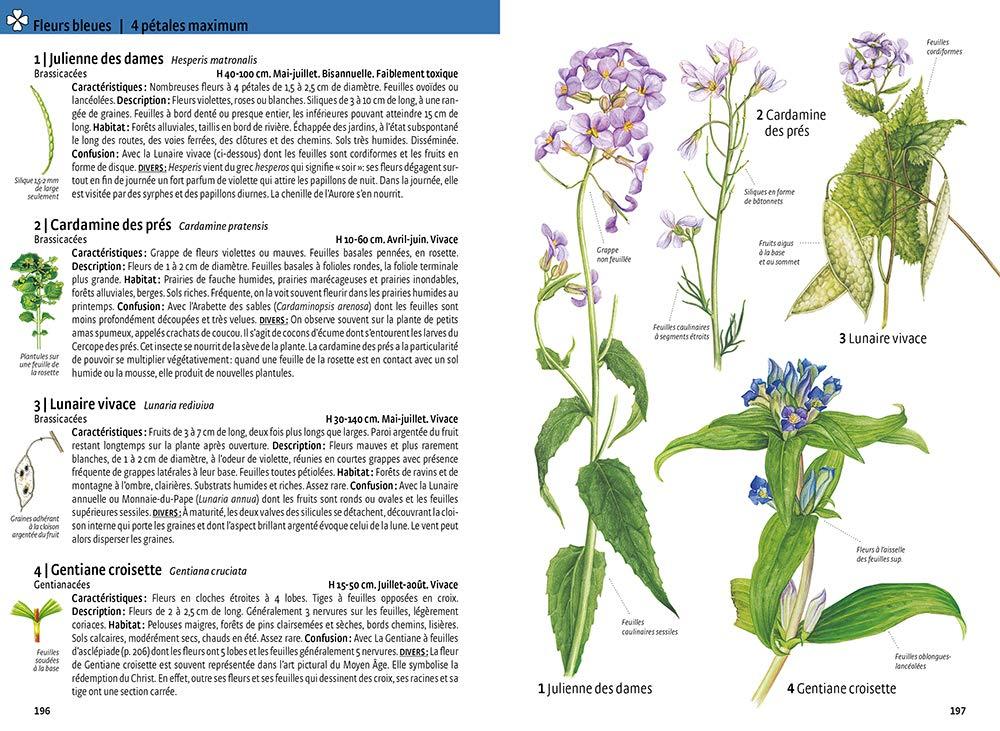 Sitonelectic Fleurs s/éch/ées D/écoration Fleurs press/ées pour travaux manuels en r/ésine /époxy 2