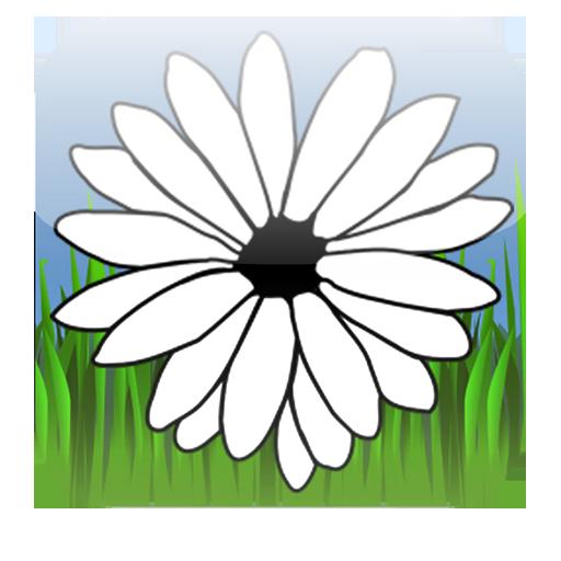 Daisy Game (Daisy Game)