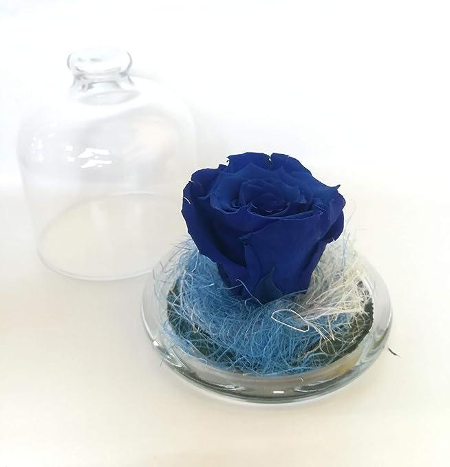 Rosa preservada Azul. Gratis TU ENVÍO. Rosa eterna Azul tamaño XL ...