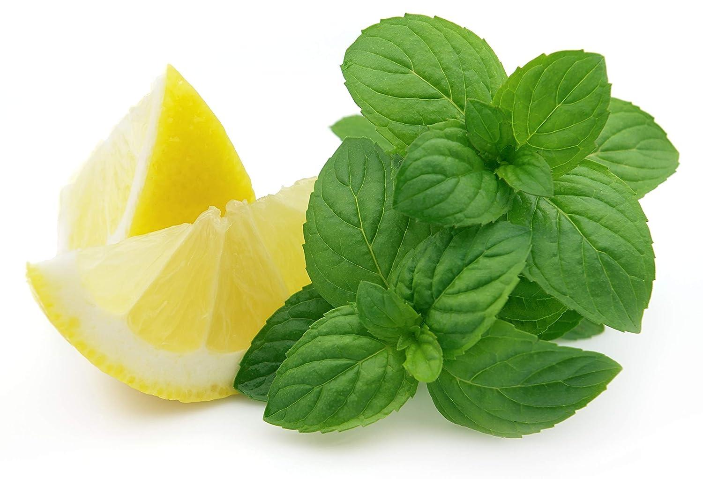 レモンミント - ハーブ種子 B00B2B3ZWG