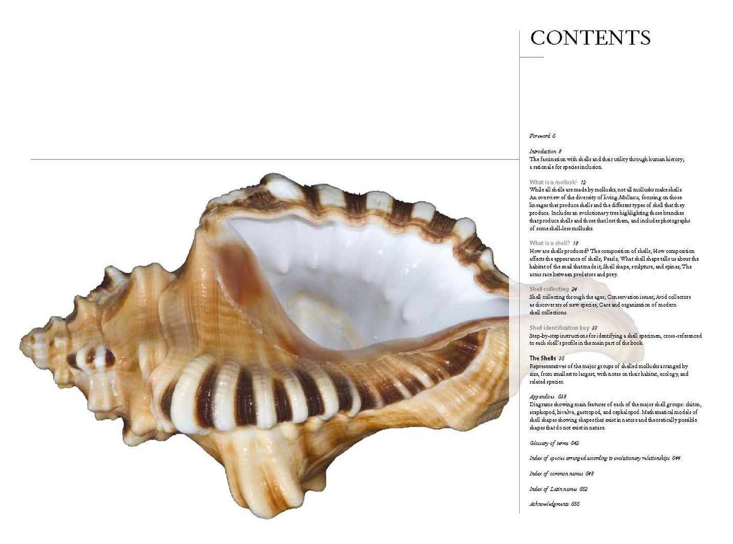 The Book Of Shells: A Lifesize Guide To Identifying And Classifying Six  Hundred Seashells: M G Harasewych, Fabio Moretzsohn: 9780226315775:  Amazon: