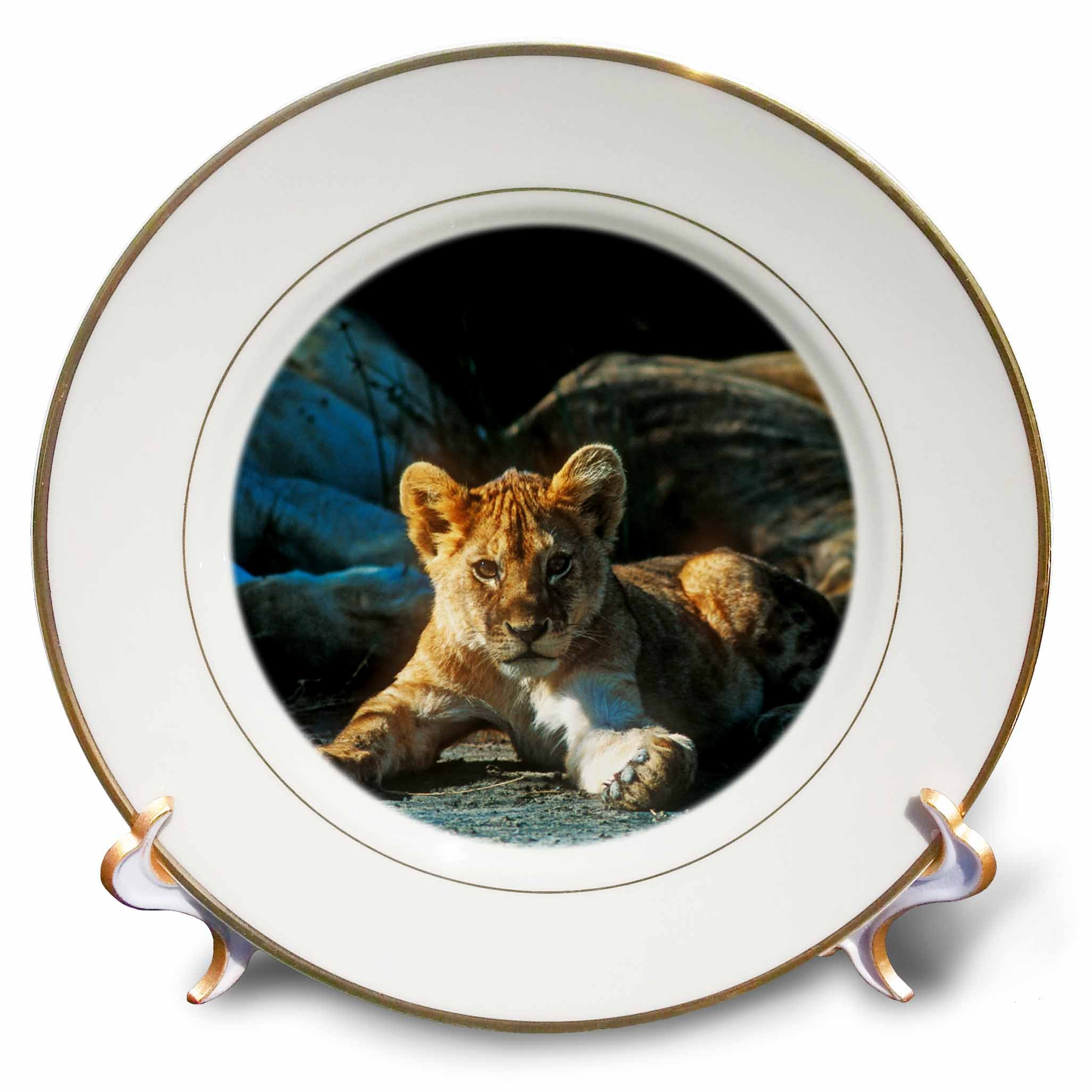 3dRose Danita Delimont - Baby Animals - African Lion, Panthera leo, Cub Resting with its Family - 8 inch Porcelain Plate (cp_256901_1)