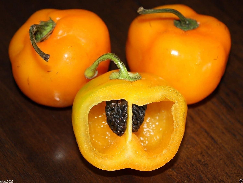 PinkdoseRocoto Chili Seeds, Orange Mazano, Apple Chilli (20 Seeds) can Live Over 15 Years