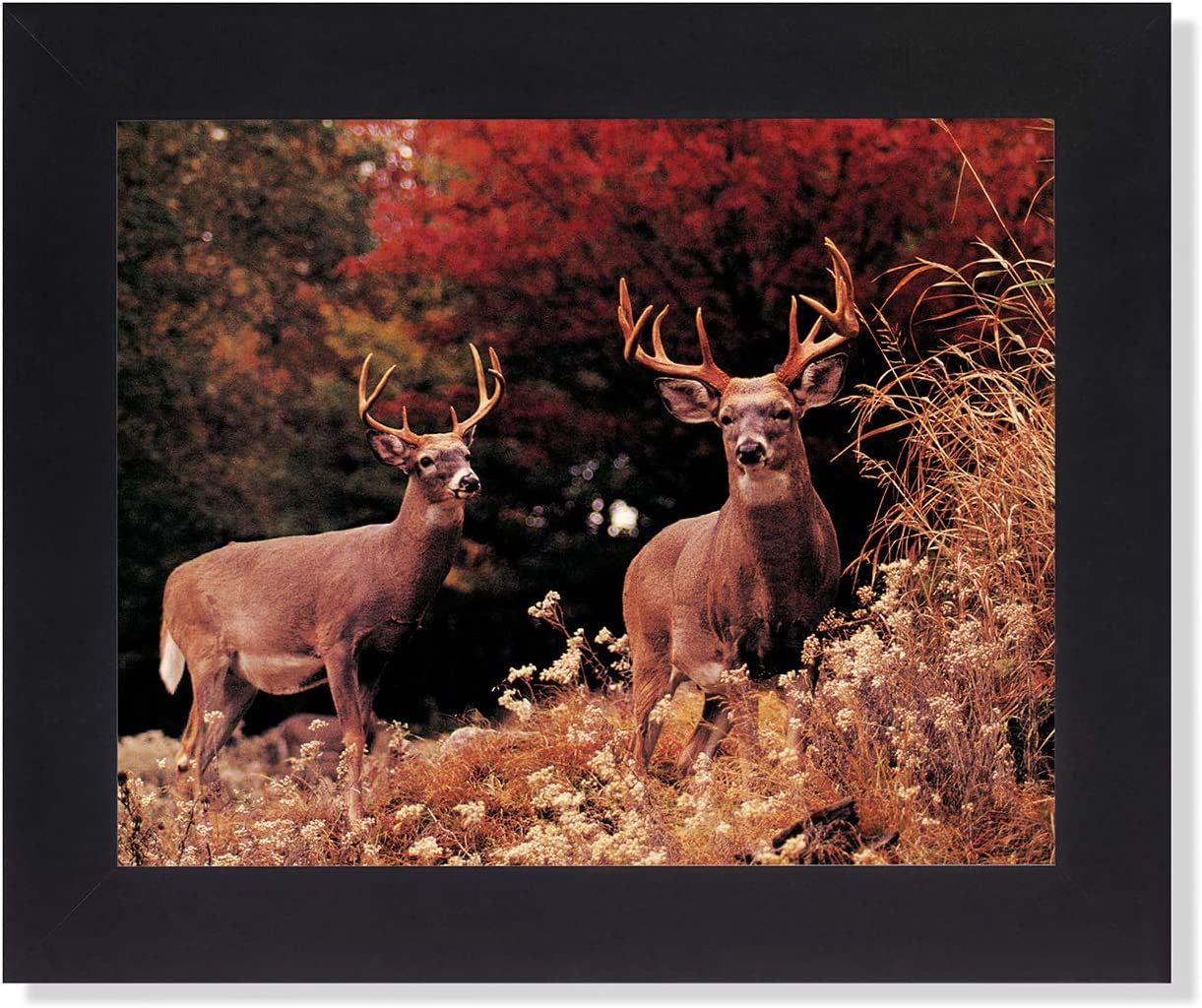 Two Buck Deer Large Antler Racks In Grass Photo Wall Picture Framed Art Print Posters Prints