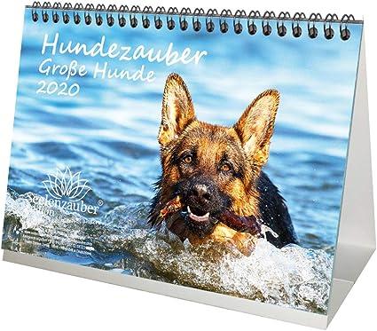DIN A5 para cachorros y perros Calendario de mesa para perros grandes Hundezauber 2020