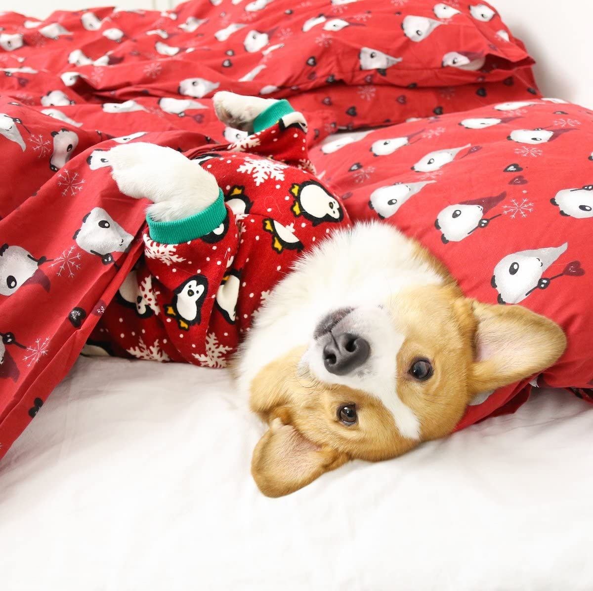 Toy Terrier Dog onesies Bichon Gift for pets. Pet Costume with animals Chihuahua Dog or Sphynx cat Pajamas Pajamas for York