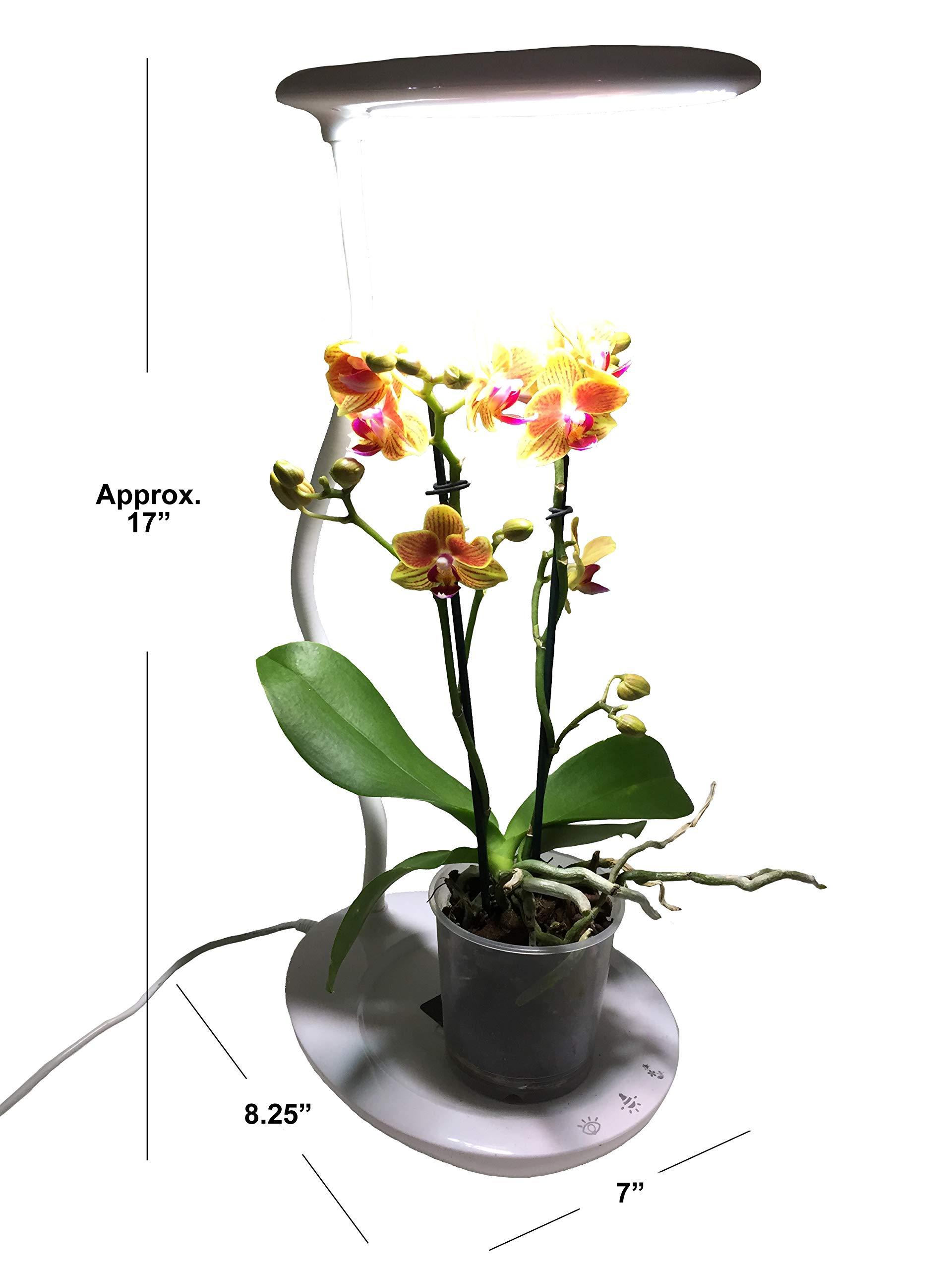 Mr. Light Multi-Function LED Desktop Plant Lamp, UL Listed. by Mr. Light