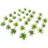 75 Miniature Fairy Garden Plants - Live Tillandsia Air Plants for Enchanted Gardens - Terrarium House Plant Accessories and G
