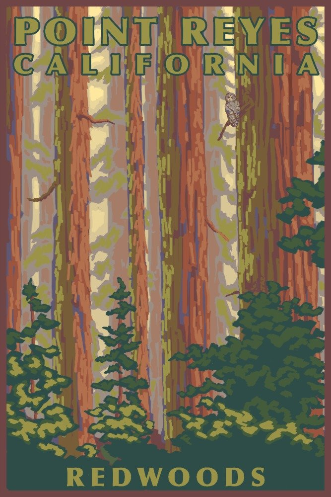 24x36 Giclee Gallery Print, Wall Decor Travel Poster Redwood Forest View California Point Reyes