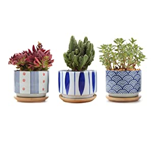T4U 3 Inch Small Ceramic Japanese Style Succulent Pot Set of 3 with Drainage Bamboo Tray, White Cactus Plant Container Planter Pot for Home Decor, Excluding Plants