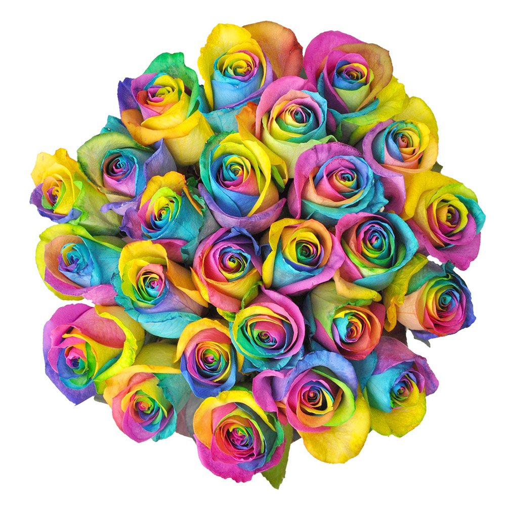Rainbow Roses - 25 Stems | Fresh Cut & Farm Direct | XXL Blooms | Magnaflor